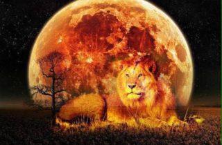 The Full Moon In Leo, February 9th, 2020